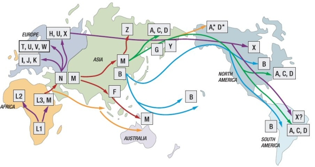 Worldwide genetic and cultural change in human evolution